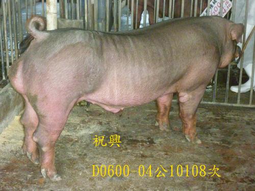 台灣區種豬產業協會10108期D0600-04側面相片