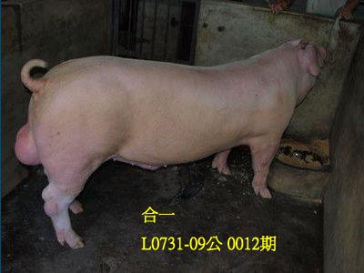 台灣動物科技研究所竹南檢定站10012期L0731-09拍賣相片