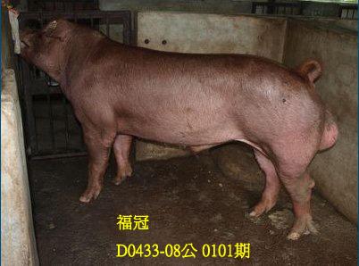 台灣動物科技研究所竹南檢定站10101期D0433-08拍賣相片