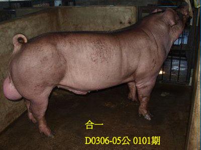 台灣動物科技研究所竹南檢定站10101期D0306-05拍賣相片