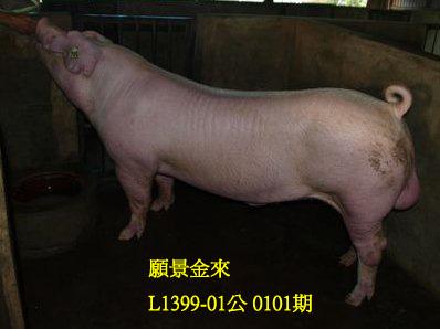 台灣動物科技研究所竹南檢定站10101期L1399-01拍賣相片