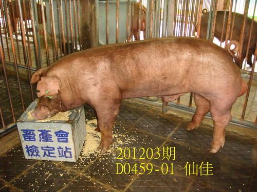 中央畜產會201203期D0459-01拍賣照片
