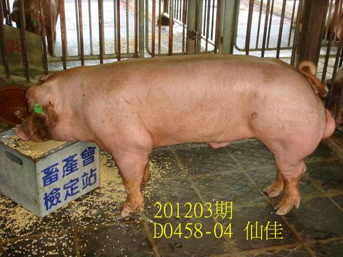 中央畜產會201203期D0458-04拍賣照片