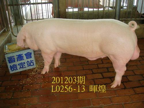 中央畜產會201203期L0256-13拍賣照片