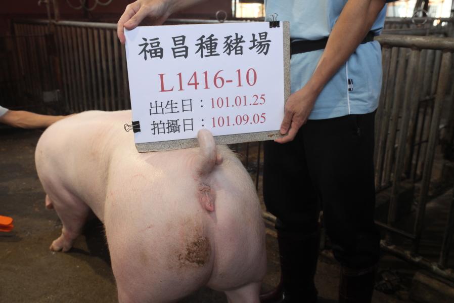 台灣區種豬產業協會10108期L1416-10後側相片