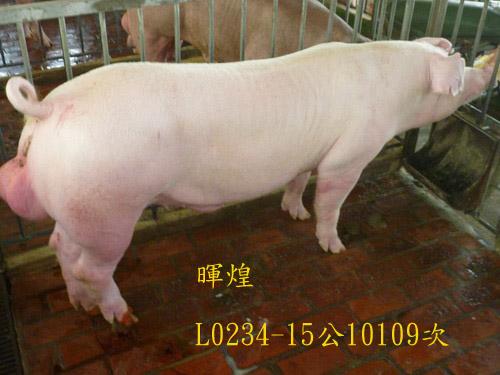 台灣區種豬產業協會10109期L0234-15側面相片