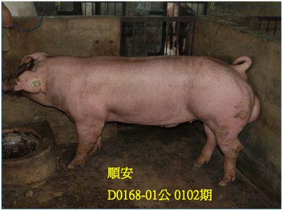 台灣動物科技研究所竹南檢定站10102期D0168-01拍賣相片