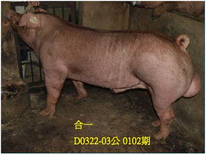 台灣動物科技研究所竹南檢定站10102期D0322-03拍賣相片
