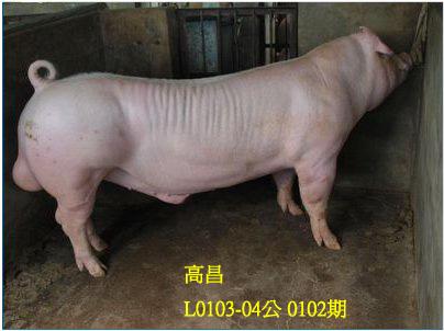 台灣動物科技研究所竹南檢定站10102期L0103-04拍賣相片
