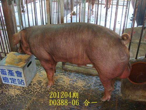 中央畜產會201204期D0388-06拍賣照片