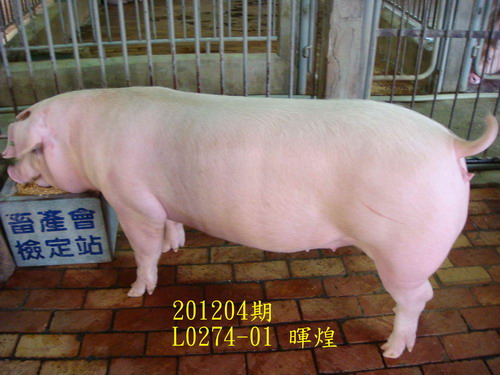 中央畜產會201204期L0274-01拍賣照片