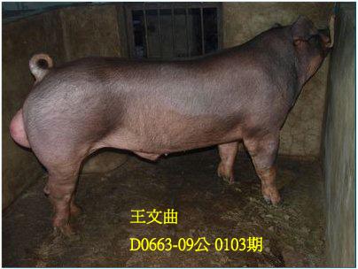 台灣動物科技研究所竹南檢定站10103期D0663-09拍賣相片