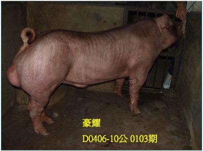 台灣動物科技研究所竹南檢定站10103期D0406-10拍賣相片