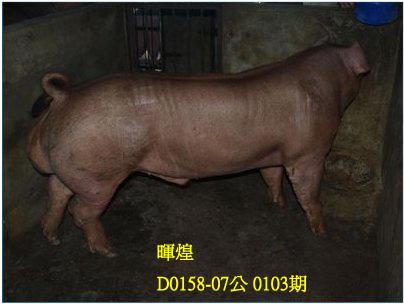 台灣動物科技研究所竹南檢定站10103期D0158-07拍賣相片