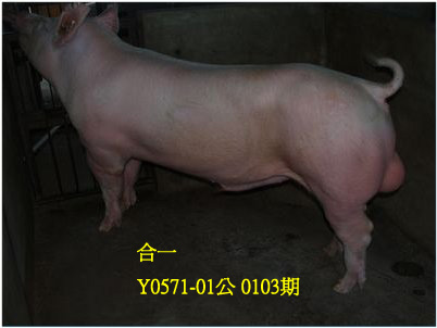 台灣動物科技研究所竹南檢定站10103期Y0571-01拍賣相片