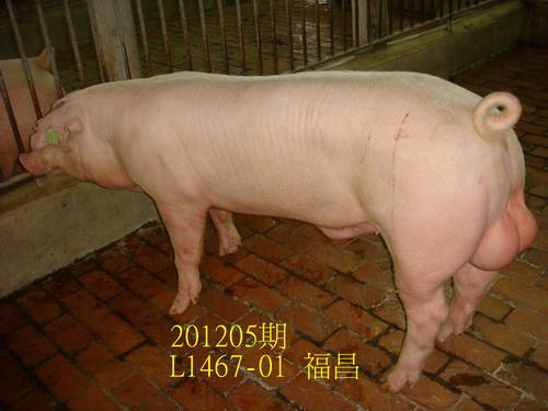 中央畜產會201205期L1467-01拍賣照片