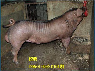 台灣動物科技研究所竹南檢定站10104期D0644-09拍賣相片
