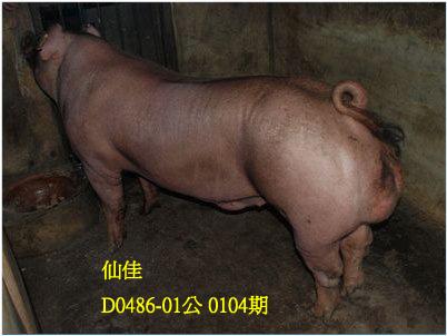 台灣動物科技研究所竹南檢定站10104期D0486-01拍賣相片