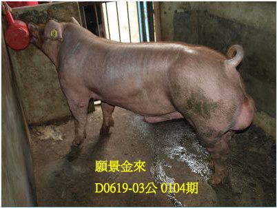 台灣動物科技研究所竹南檢定站10104期D0619-03拍賣相片