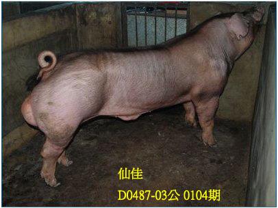 台灣動物科技研究所竹南檢定站10104期D0487-03拍賣相片