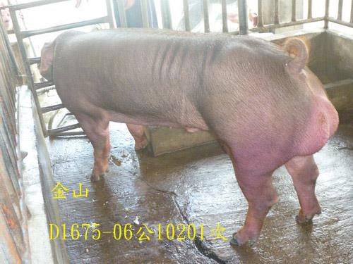 台灣區種豬產業協會10201期D1675-06側面相片