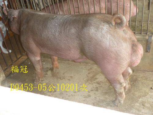 台灣區種豬產業協會10201期D0453-05側面相片