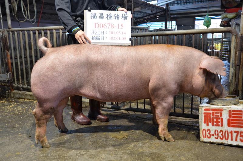 台灣區種豬產業協會10201期D0678-15側面相片