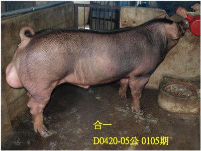 台灣動物科技研究所竹南檢定站10105期D0420-05拍賣相片