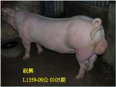 台灣動物科技研究所竹南檢定站10105期L1359-09拍賣相片