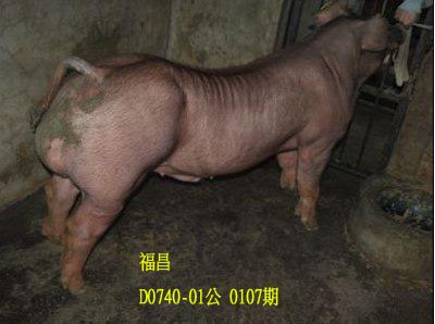台灣動物科技研究所竹南檢定站10107期D0740-01拍賣相片