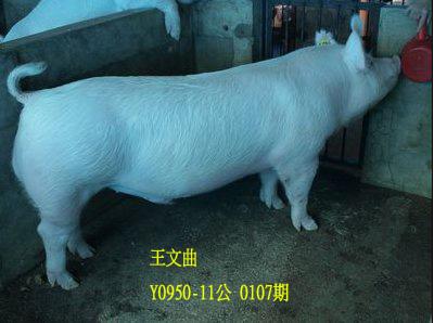 台灣動物科技研究所竹南檢定站10107期Y0950-11拍賣相片