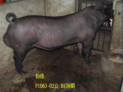 台灣動物科技研究所竹南檢定站10108期F1063-02拍賣相片