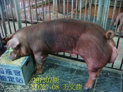 中央畜產會201207期D0707-08拍賣照片