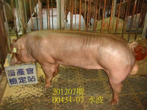 中央畜產會201207期D0434-07拍賣照片