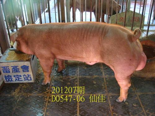 中央畜產會201207期D0547-06拍賣照片