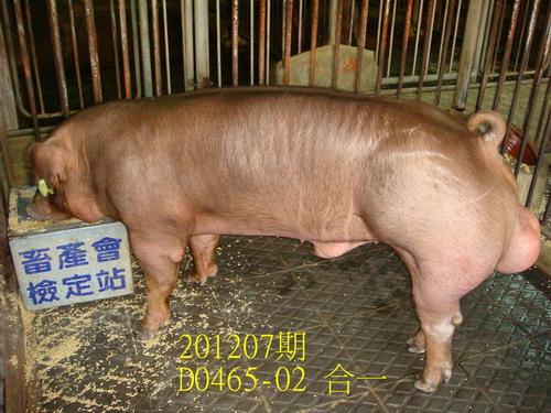 中央畜產會201207期D0465-02拍賣照片