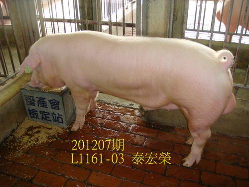 中央畜產會201207期L1161-03拍賣照片