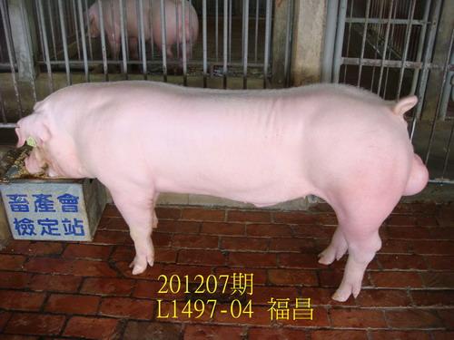 中央畜產會201207期L1497-04拍賣照片