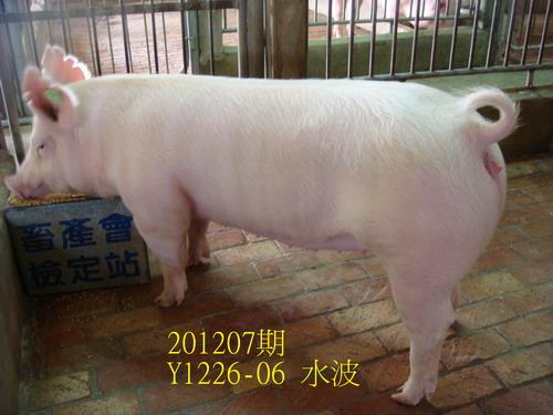 中央畜產會201207期Y1226-06拍賣照片
