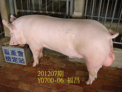 中央畜產會201207期Y0700-06拍賣照片