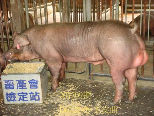 中央畜產會201209期D0728-09拍賣照片