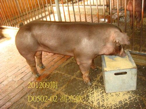 中央畜產會201209期D0502-02拍賣照片
