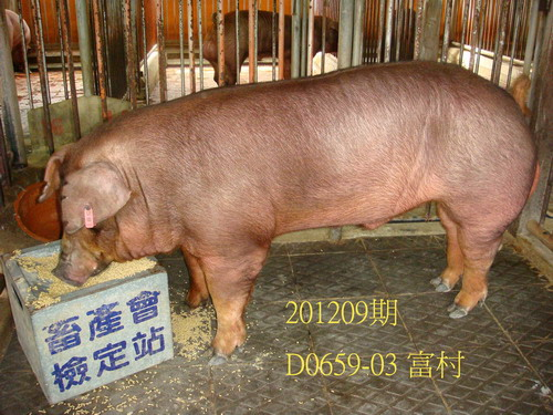 中央畜產會201209期D0659-03拍賣照片