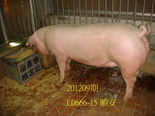 中央畜產會201209期L0666-15拍賣照片