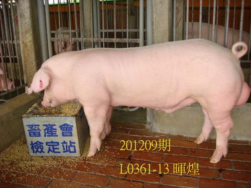 中央畜產會201209期L0361-13拍賣照片