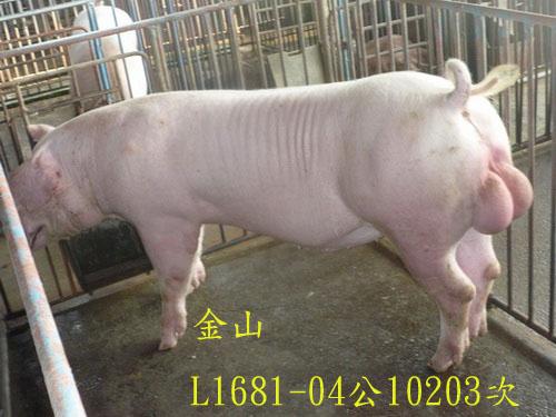 台灣區種豬產業協會10203期L1681-04側面相片