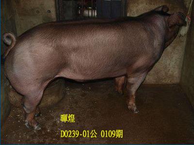 台灣動物科技研究所竹南檢定站10109期D0239-01拍賣相片