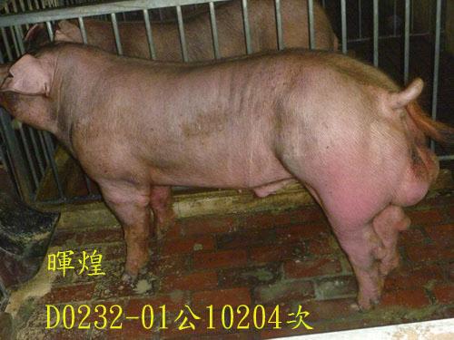 台灣區種豬產業協會10204期D0232-01側面相片