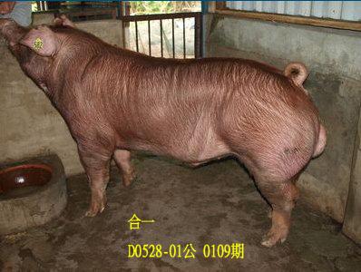台灣動物科技研究所竹南檢定站10109期D0528-01拍賣相片