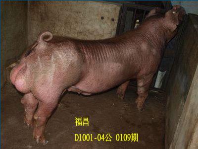 台灣動物科技研究所竹南檢定站10109期D1001-04拍賣相片